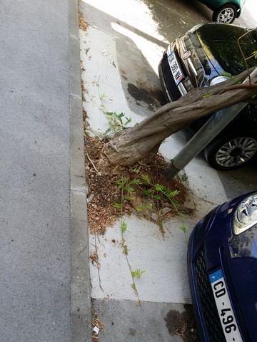 recetion parking racine d arbre